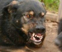 В Крыму участились случаи бешенства животных на полуострове