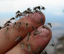 Зеленые зоны Ялты обработают от комаров и клещей