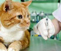 В Щебетовке и Краснокаменке вакцинируют животных