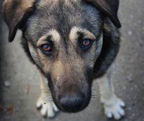 В Ленино спасли собаку, которая шесть дней просидела в подвале магазина