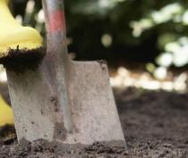 В апреле в Симферополе состоится еще одна массовая высадка деревьев