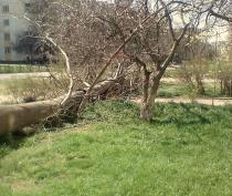 На Блюхера в Керчи упал тополь