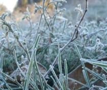 В Симферополе ожидаются заморозки