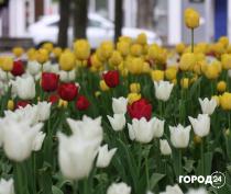 Цветущая Феодосия