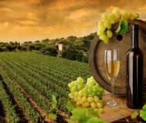 Виноделие принесло в бюджет Крыма 1,5 млрд рублей доходов