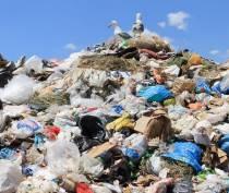 Власти Симферополя потратят более 22 млн рублей на сбор и вывоз мусора