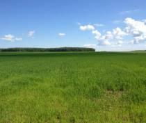 Более 170 земельных участков сельхозназначения в Крыму передадут в собственность муниципалитетов