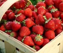 Крымские аграрии ожидают рекордный за последние четыре года урожай клубники