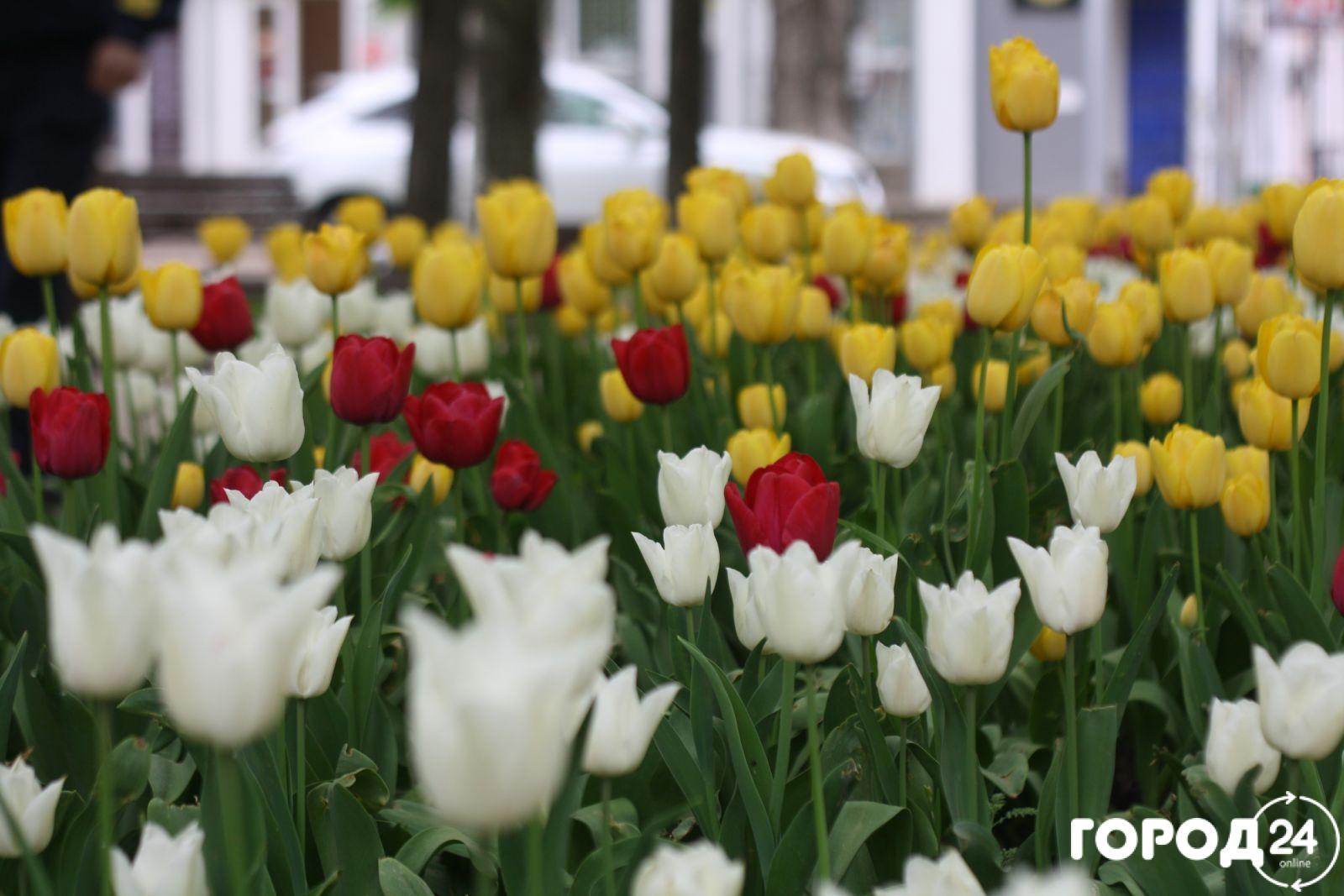 Фото новости - Цветущая Феодосия