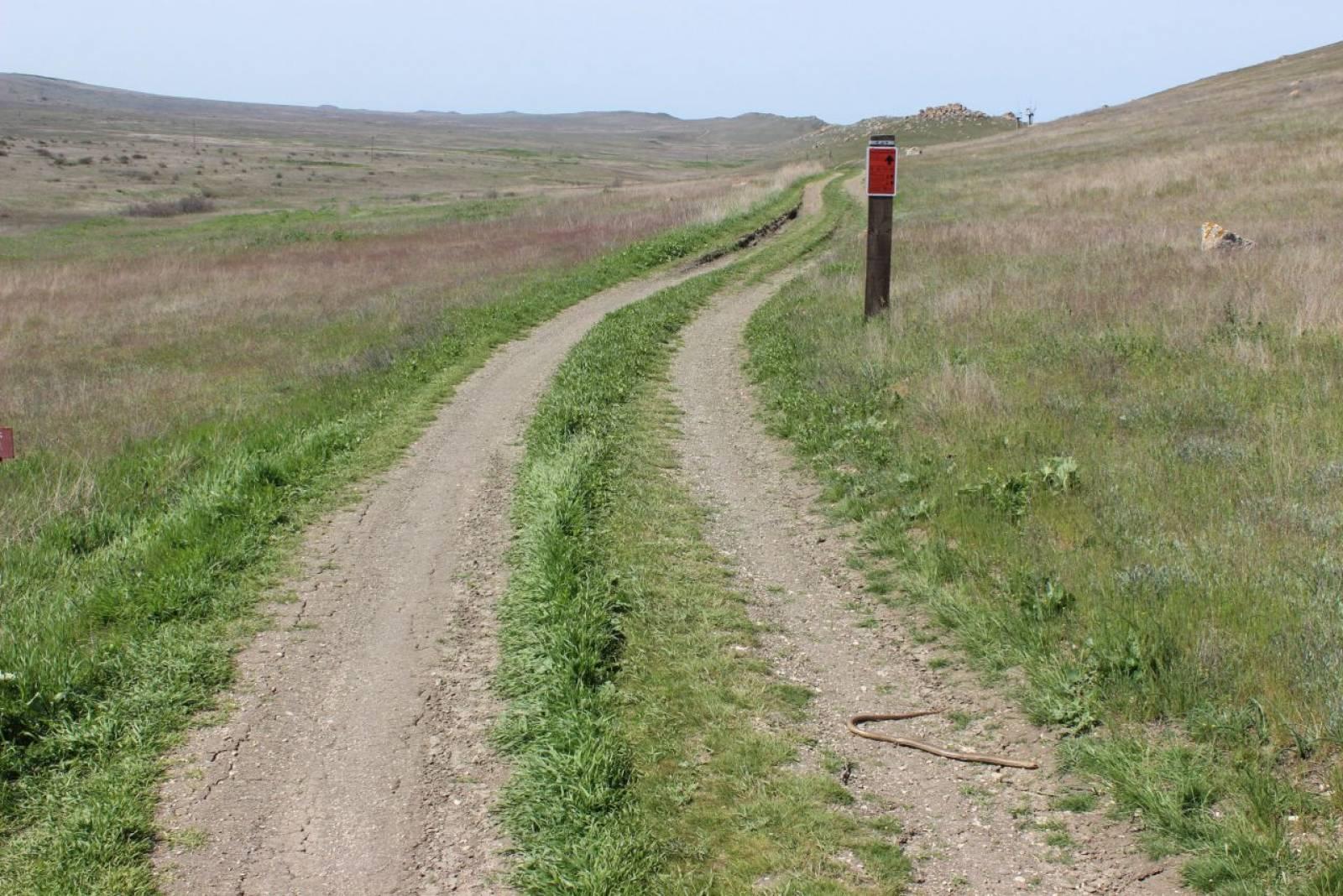 Фото новости - Внимание! Дорогу переходят безногие ящерицы