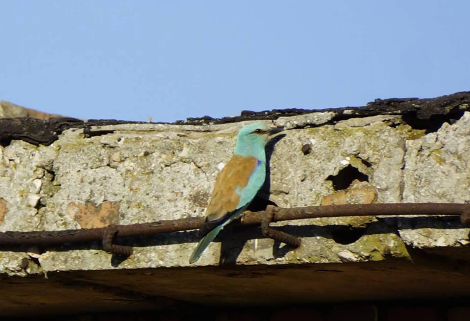 Фото новости - Птичьи семьи