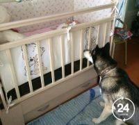 Детские кроватки Детские кровати трансформеры