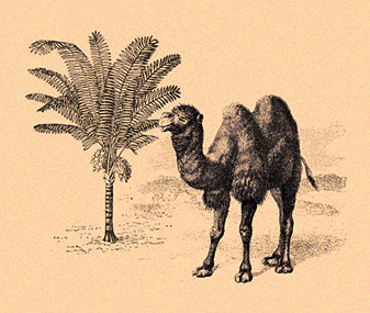 У верблюжьих горбов логотип