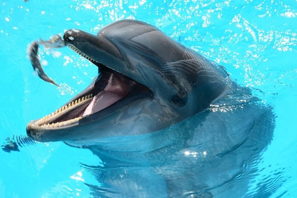 Карадагский дельфинарий: мнение специалиста