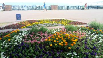 Цветы на набережной в Феодосии