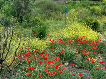 Феодосия: рассветы, бабочки и кошечки