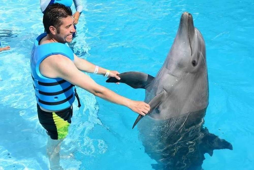 Прокуратура проверит все дельфинарии Крыма