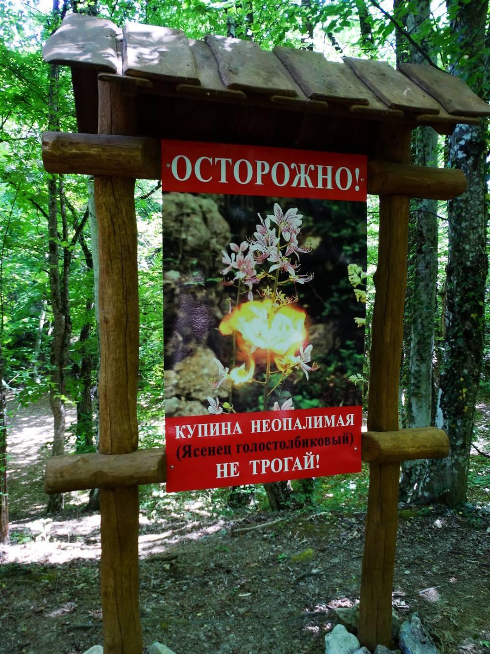 Опасный крымский цветок