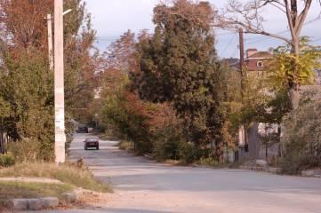 В Феодосии стартует кампания по обрезке деревьев