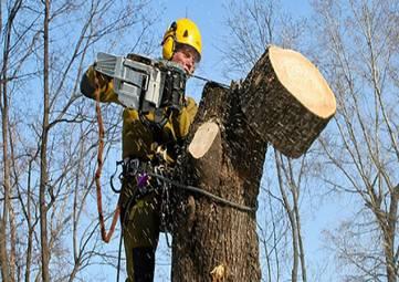 В Феодосии не могут  определиться с ответственными за спил вросших в газосети деревьев