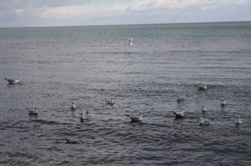 Чайки в Феодосийском заливе