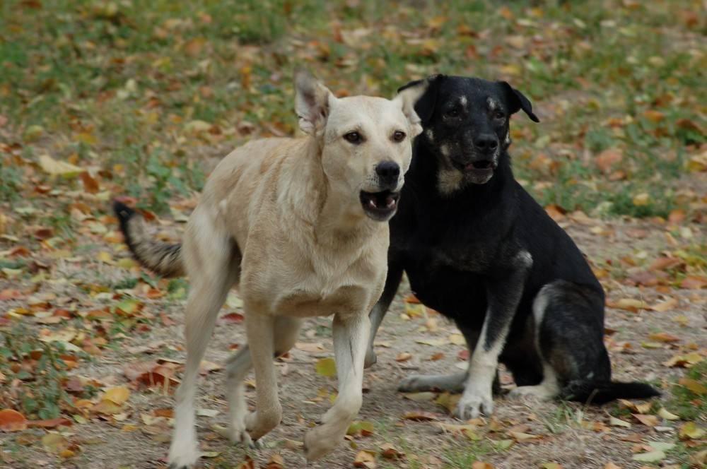 В Феодосии вакцинировано против бешенства более двух тысяч собак и более тысячи кошек