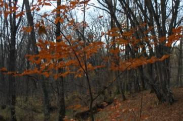 А в лесу под Феодосией...