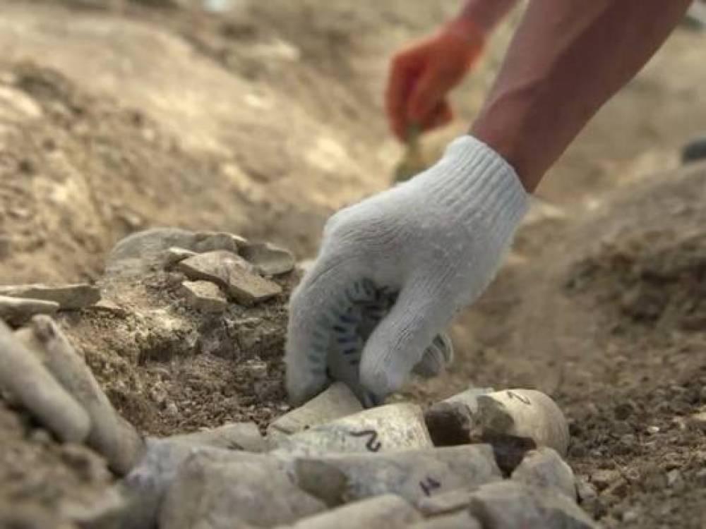 Археологи обнаружили в Крыму останки детеныша кита возрастом около 10 млн лет