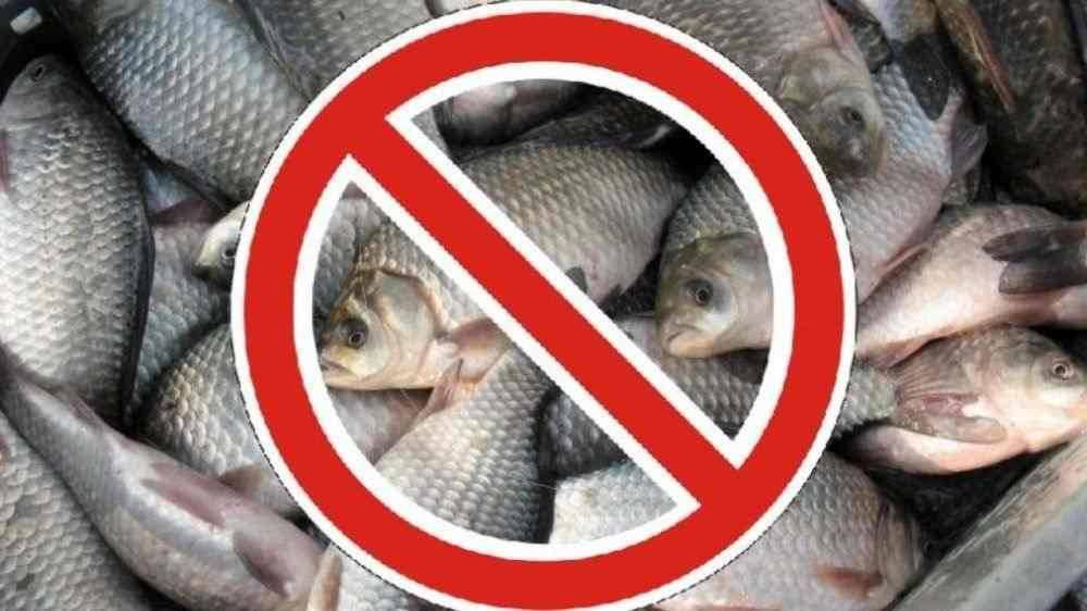 С августа по сентябрь вводится запрет на добычу определённых видов биоресурсов Чёрного моря