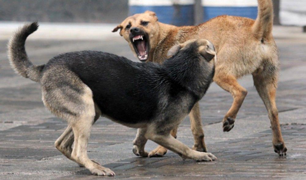В Феодосии свора бродячих собак напала на женщину