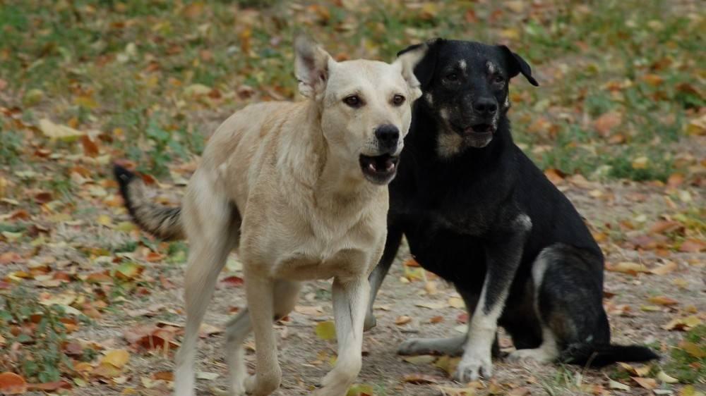 В Феодосии продолжается отлов и стерилизация безнадзорных животных