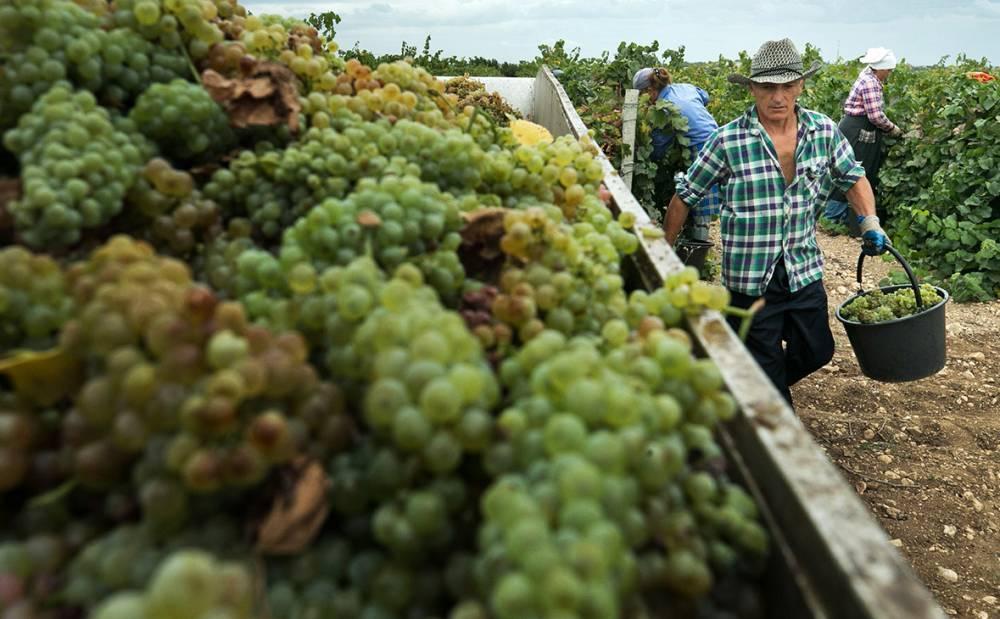 Новые акцизы на алкоголь не приведут к росту цен на вино