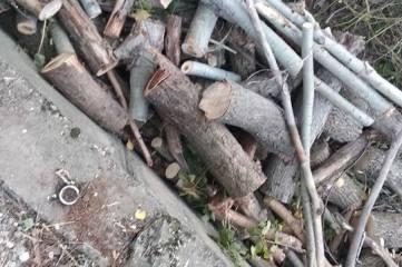 На набережной Симферополя незаконно спилили деревья, чтобы сделать парковку