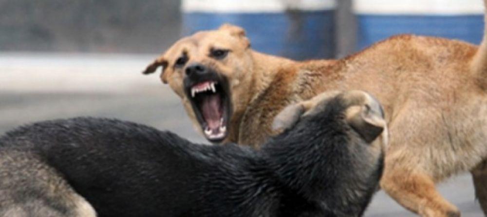 В Феодосии планируют создать собачий питомник