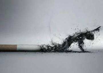 Табачным торговцам в России закрутят гайки и проверка выявила сокрытие выручки владельцем зоопарков в Крыму на 20 млн рублей