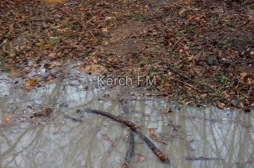 В Комсомольском парке после дождя новая дорожка превратилась в озеро