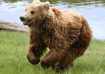 Экс-мер столицы Ингушетии хочет забрать животных из «Тайгана»