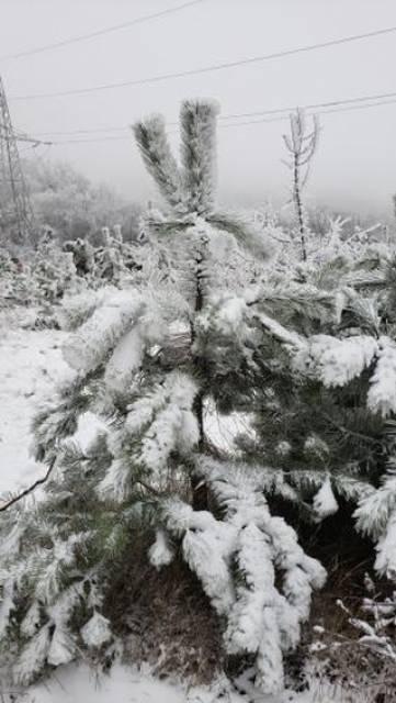 К нам пришла зима. Фото участников конкурса