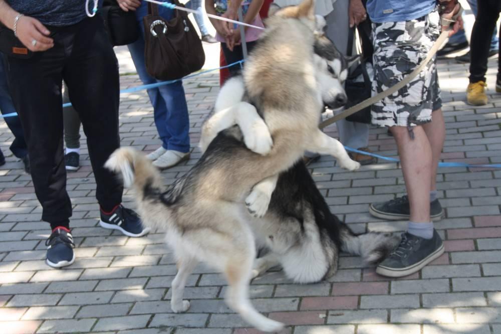 Мир! Труд! Май! Собачки! Феодосия!