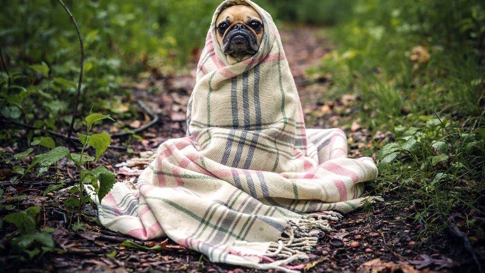 Холодно, возможен дождь
