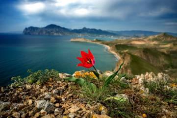 Весна в Крыму-самое красочное время года!