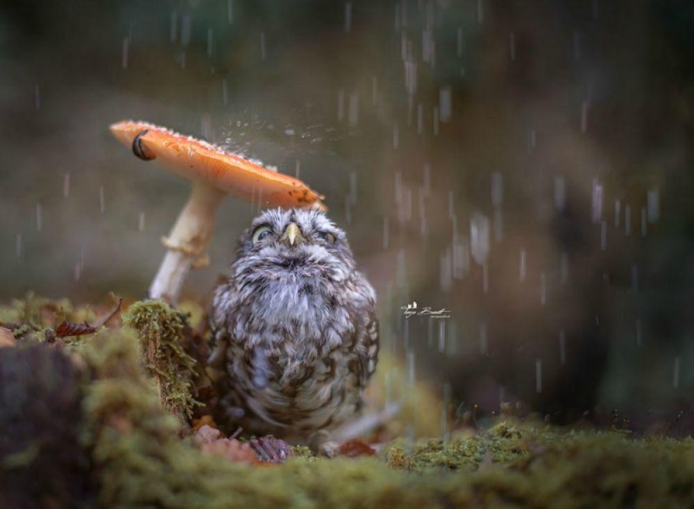 Дождь?
