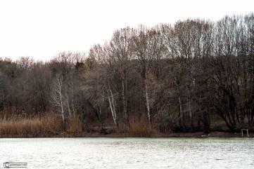 Лес, Старый Крым