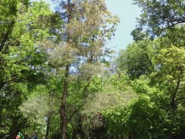 Феодосия сегодня: Комсомольский парк (ФОТО)