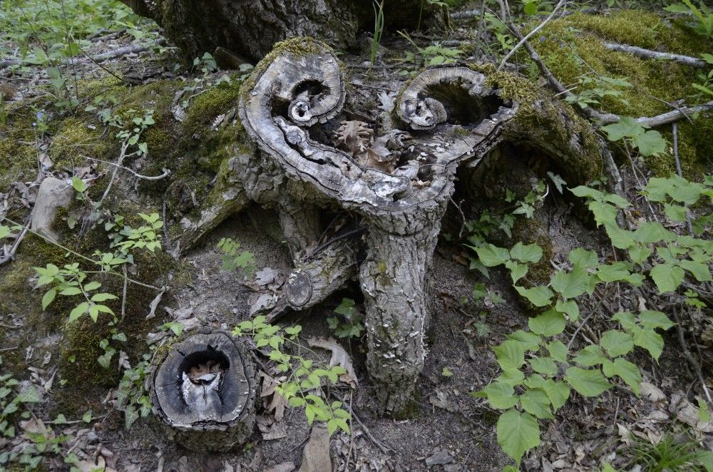 В сопровождении каменных монахов и деревянных идолов