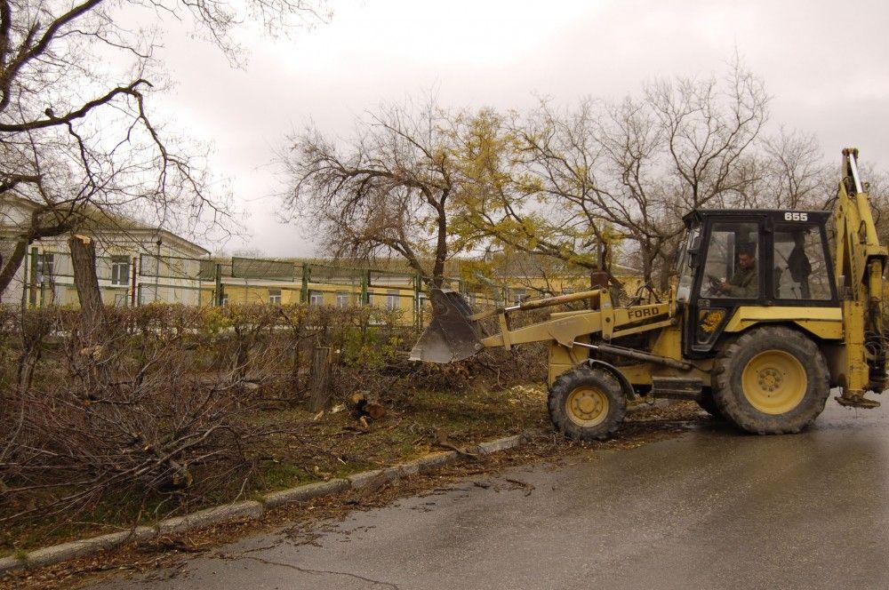 К концу года власти пустят под снос еще более двух сотен феодосийских деревьев