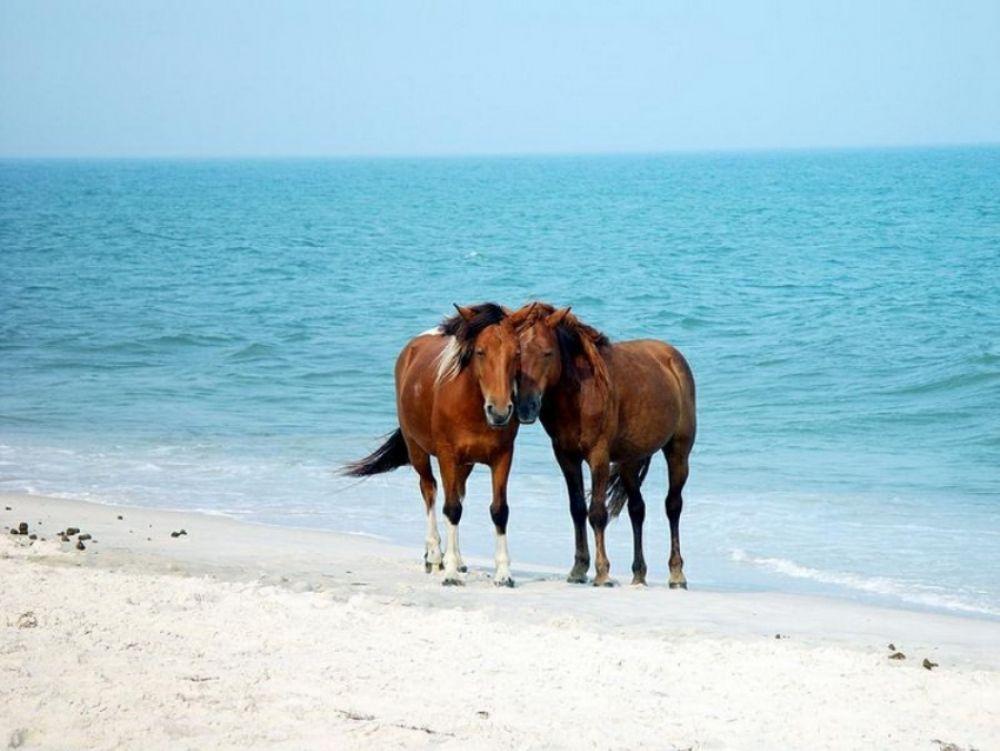 Смешались в кучу кони, люди: под Феодосией отдыхающие делили пляж с табунами лошадей