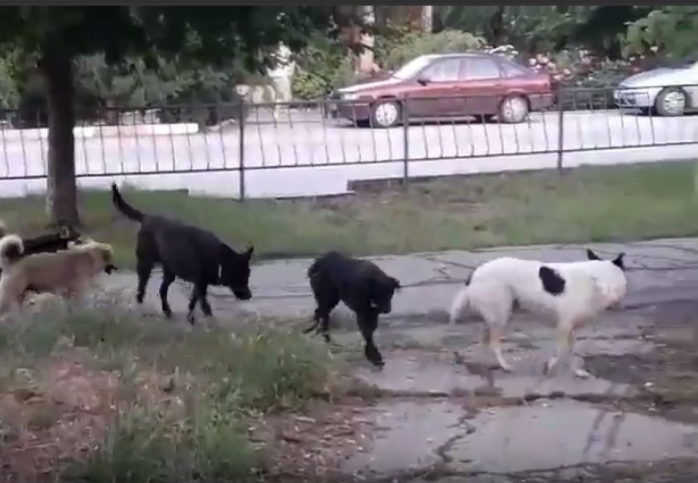 В Феодосии собачья стая напугала и вынудила женщин с детьми уходить дворами (ВИДЕО)