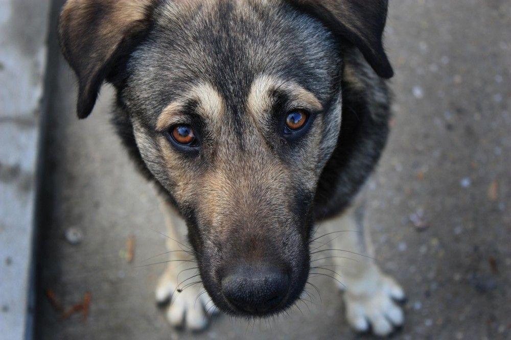 Феодосийцы сообщают о травле бродячих собак