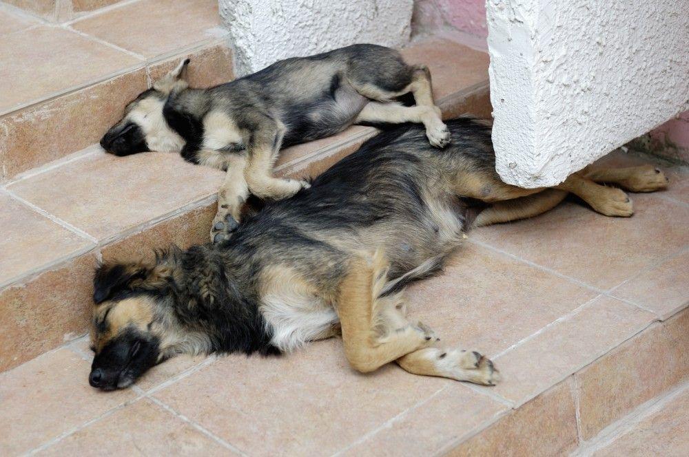 Подрядная фирма не добрала в Феодосии бездомных собак